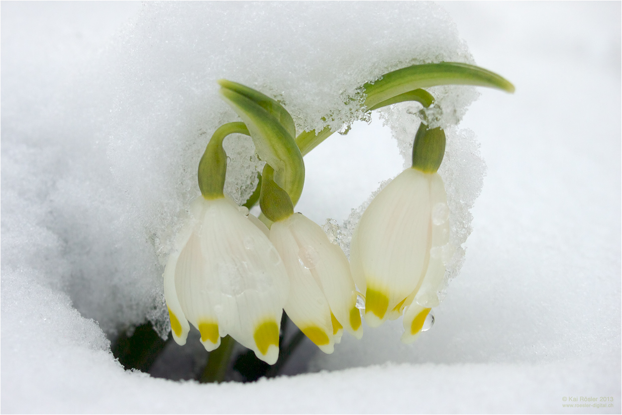 Winters Ende