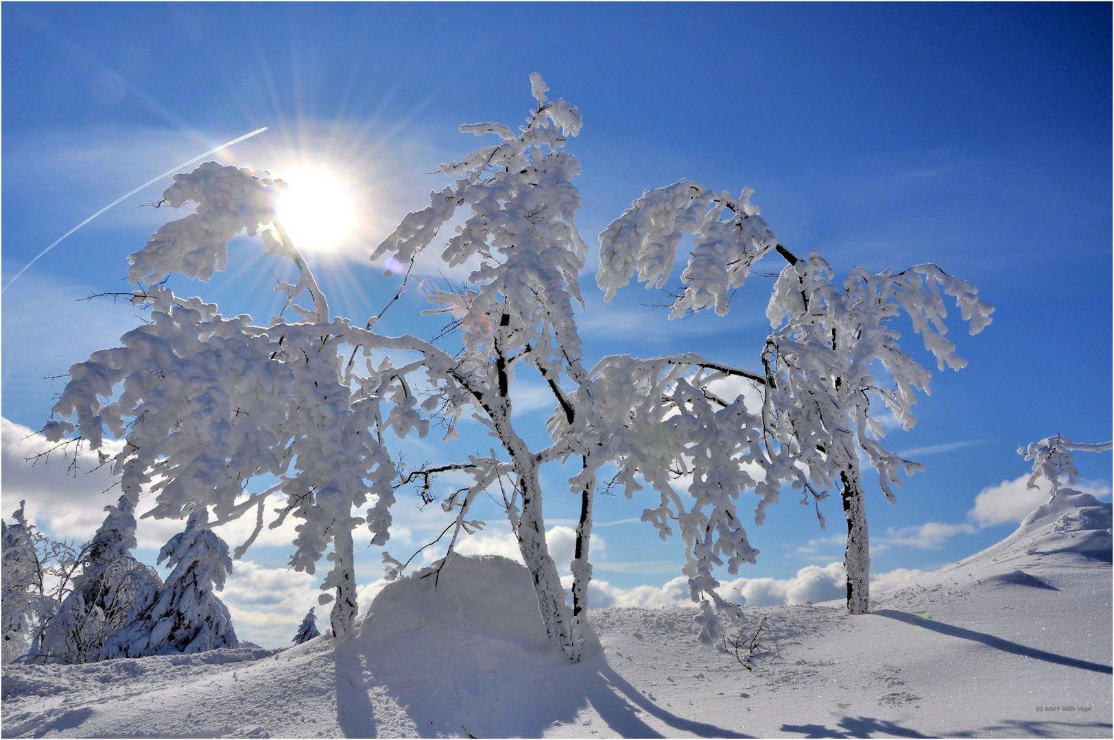 Winter's Tale ...   Wintermärchen...
