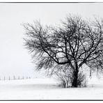 Winterscene in the Eifel 2