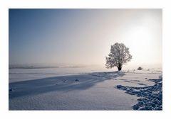 Winterschatten....