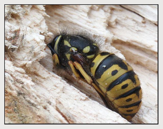 Winterschlaf Foto Bild Tiere Wildlife Insekten Bilder Auf