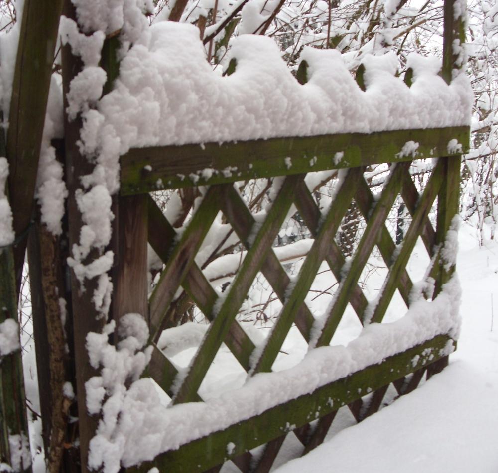 winterschmuck auf dem jägerzauntor foto & bild   jahreszeiten, natur