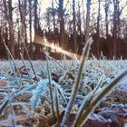 Winterschönheit ohne Schnee