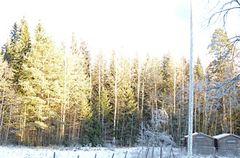 Wintersonne im hohen Norden Europas