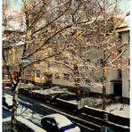 Wintersonne in verschneiten Bäumen