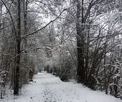 Winterspaziergang ...