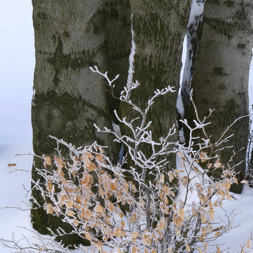 Winterspaziergang 7