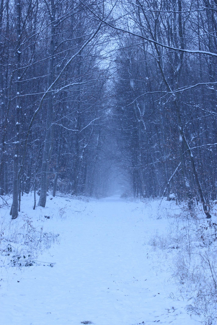 Winterspaziergang auf Monrepo
