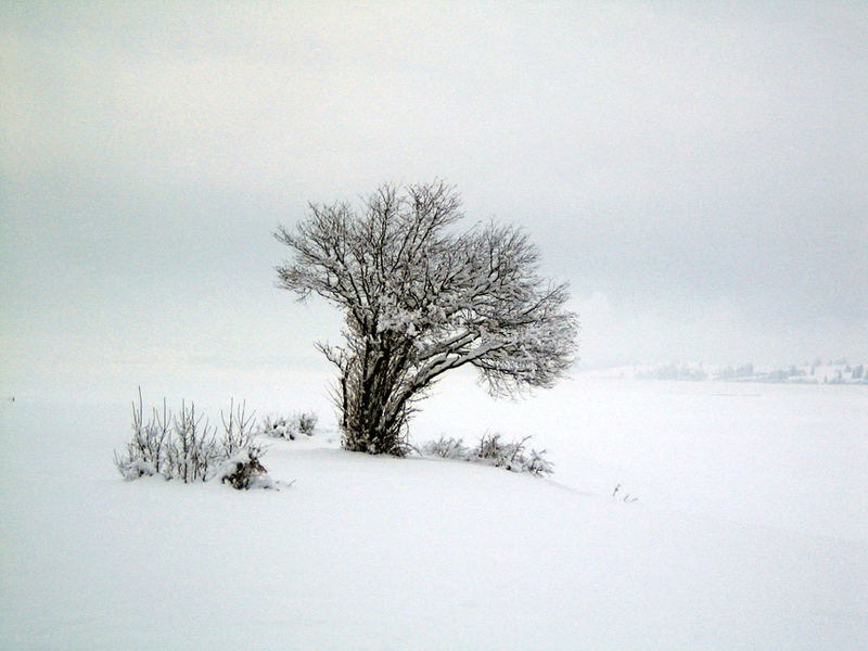 Winterspaziergang3