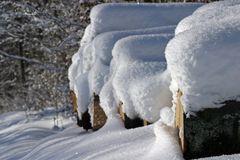 """""""Winterstämme"""""""