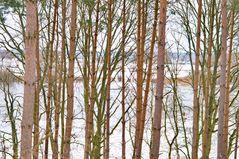 Winterstimmung an der überfluteten Elbe