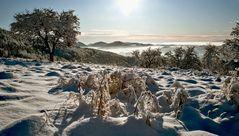 Winterstimmung auf dem Weg zum Plesch!