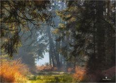 Winterstimmung im Wald 2