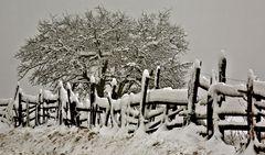 Winterstimmung in Kehr auf dem Weg zum Plesch!