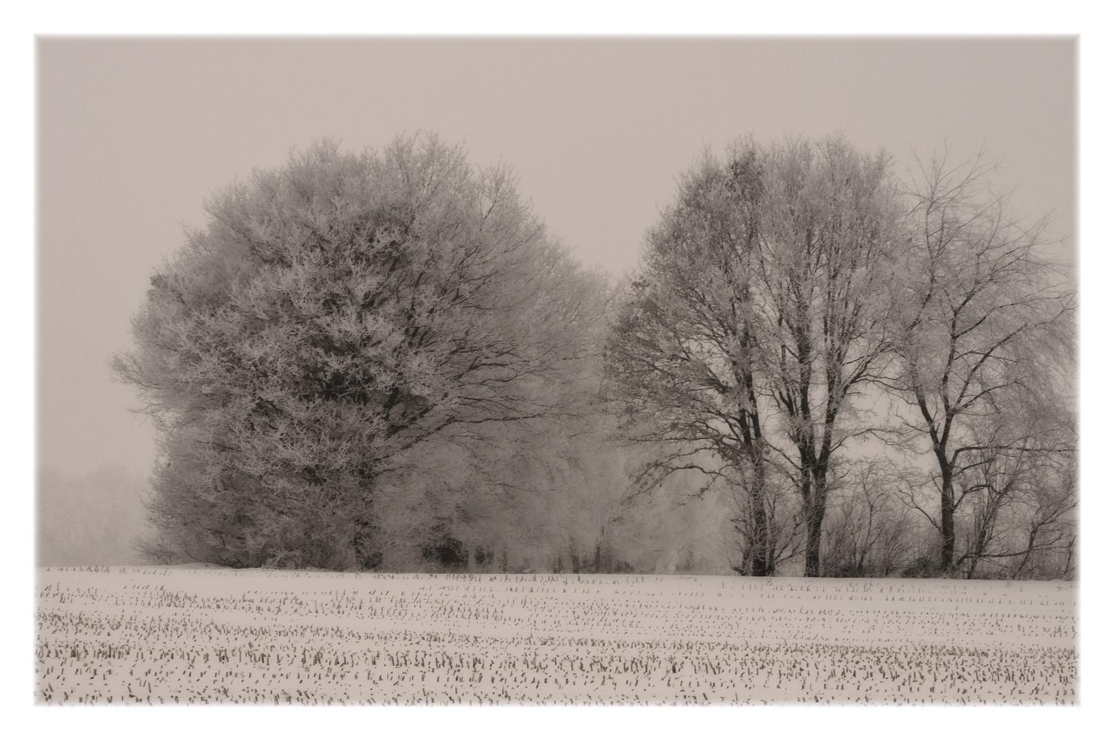 wintersuite