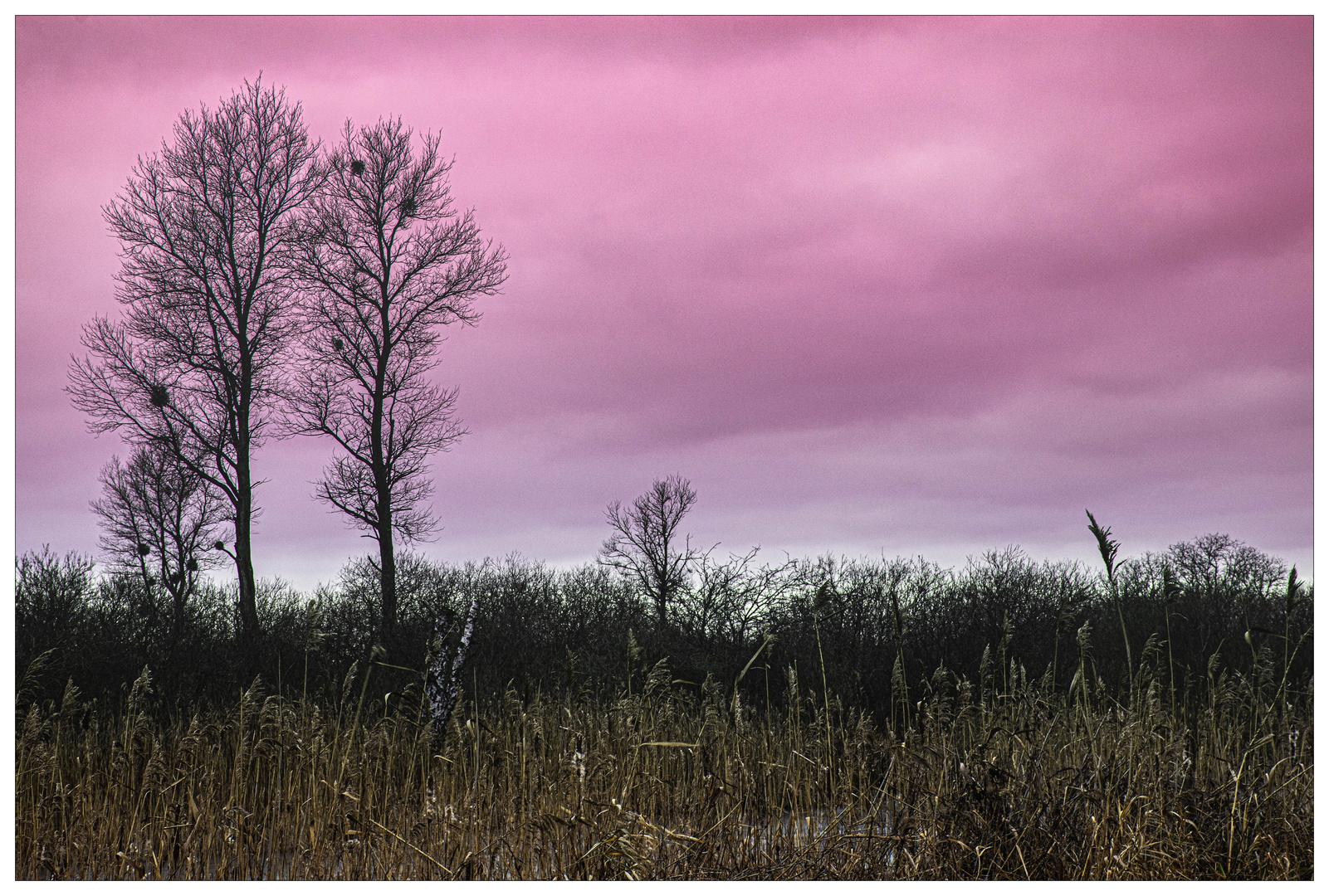 Wintertag im Feuchtgebiet Waidmannslust