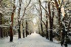 Wintertag im Harz