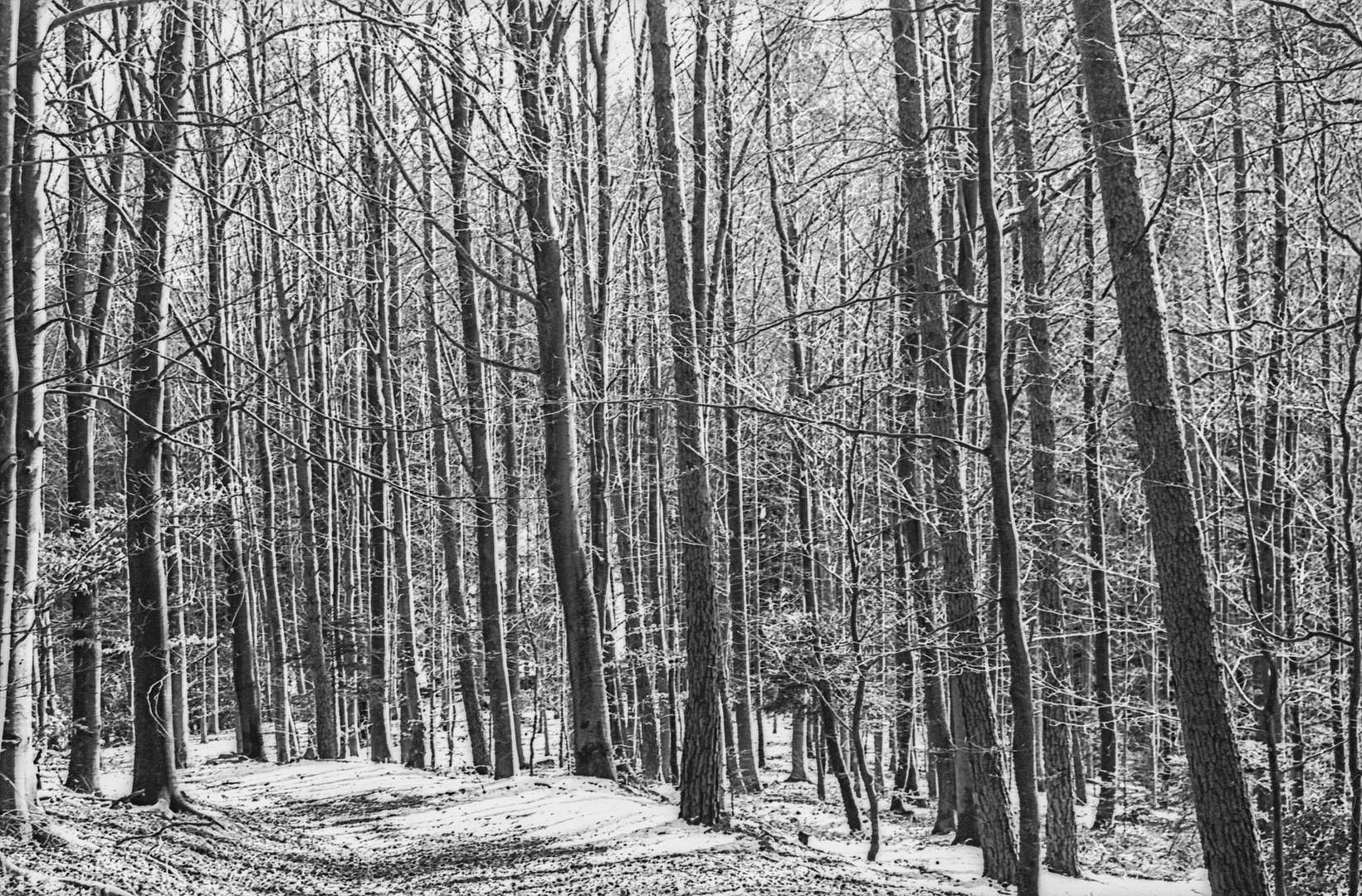 Wintertag im Wald