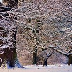 Wintertanz.....
