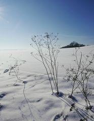 Winterträumchen ;-)