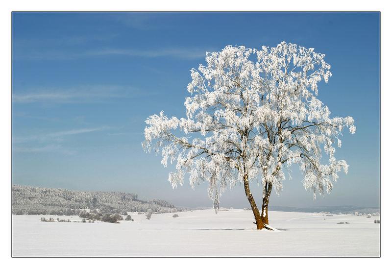 Wintertraum..