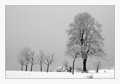 Wintertraum auf der Alb II