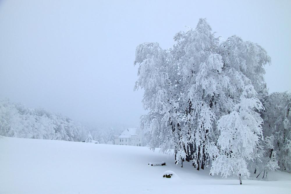 Wintertraum - wie gemalt