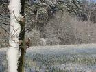 Wintertraum2