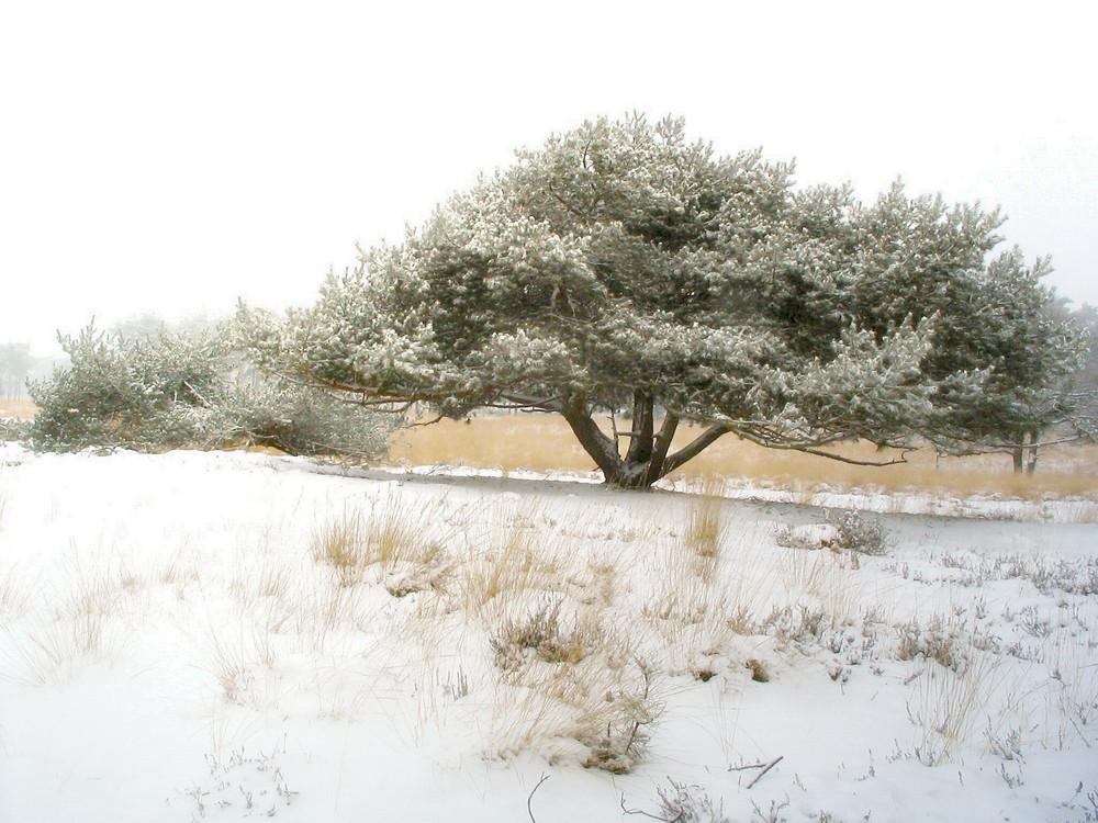 wintertraume