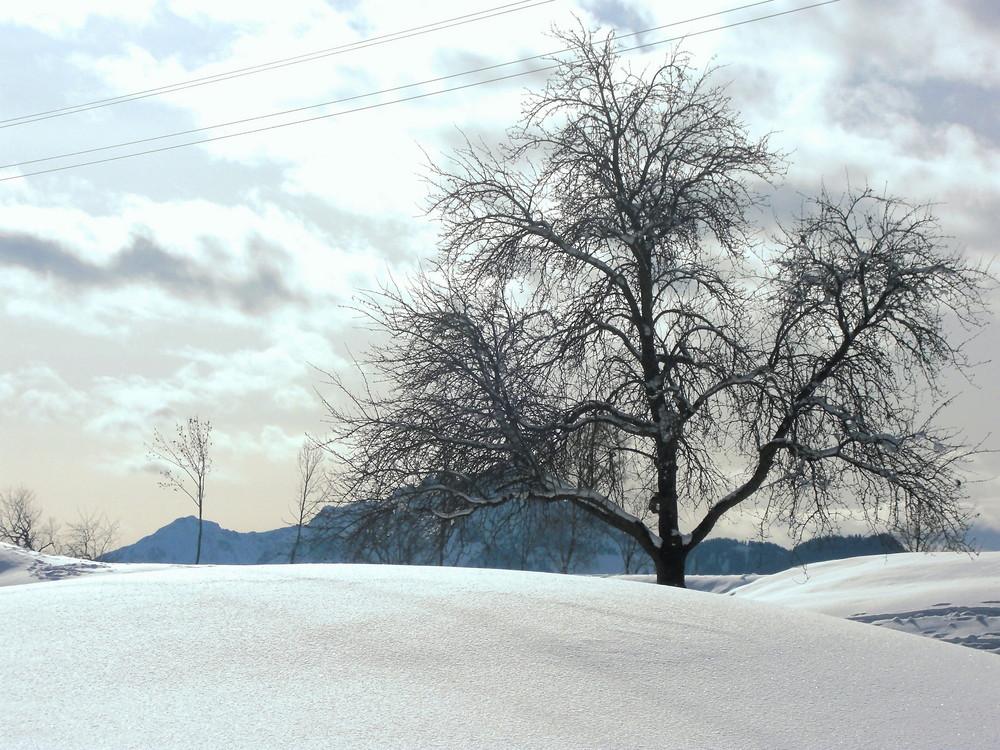 Wintertraumlandschaft.....