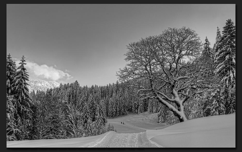 Wintertraumlandschaft