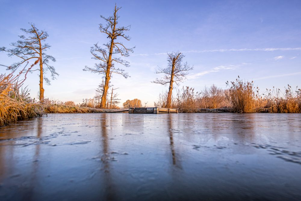 Winter:Trees