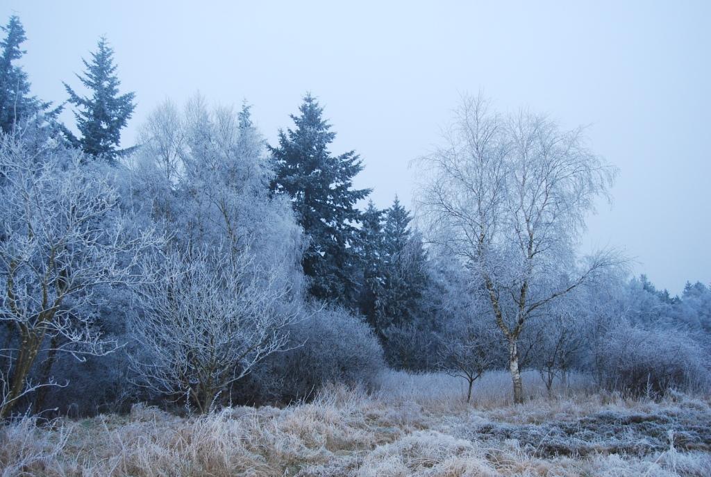 "Winterverzauberter ""Geisterwald"""