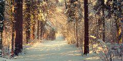 WinterWäldchen