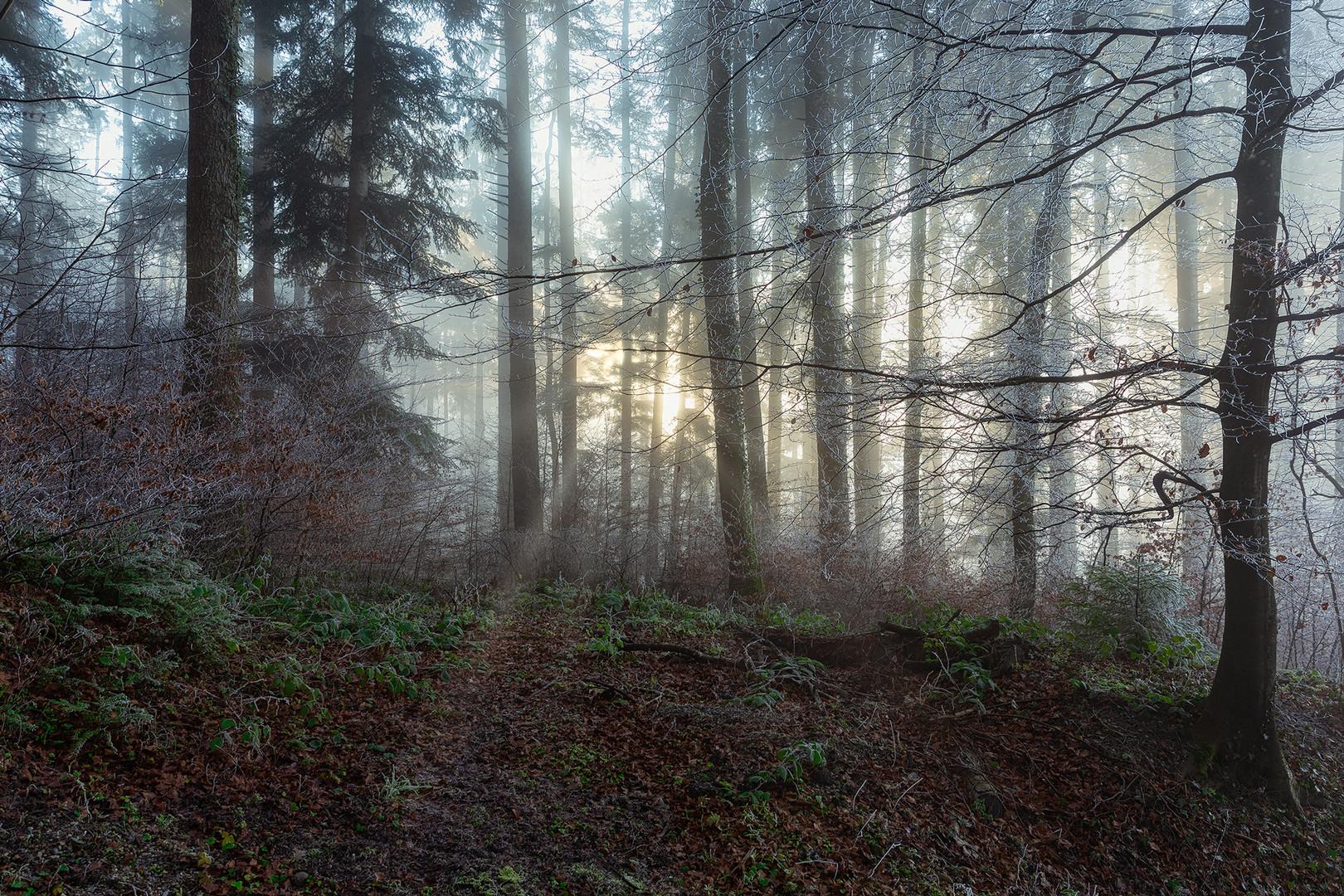 Winterwald..
