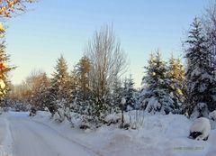 Winterwald 1