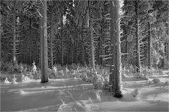 ~ Winterwald ~