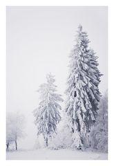 *Winterwald #2