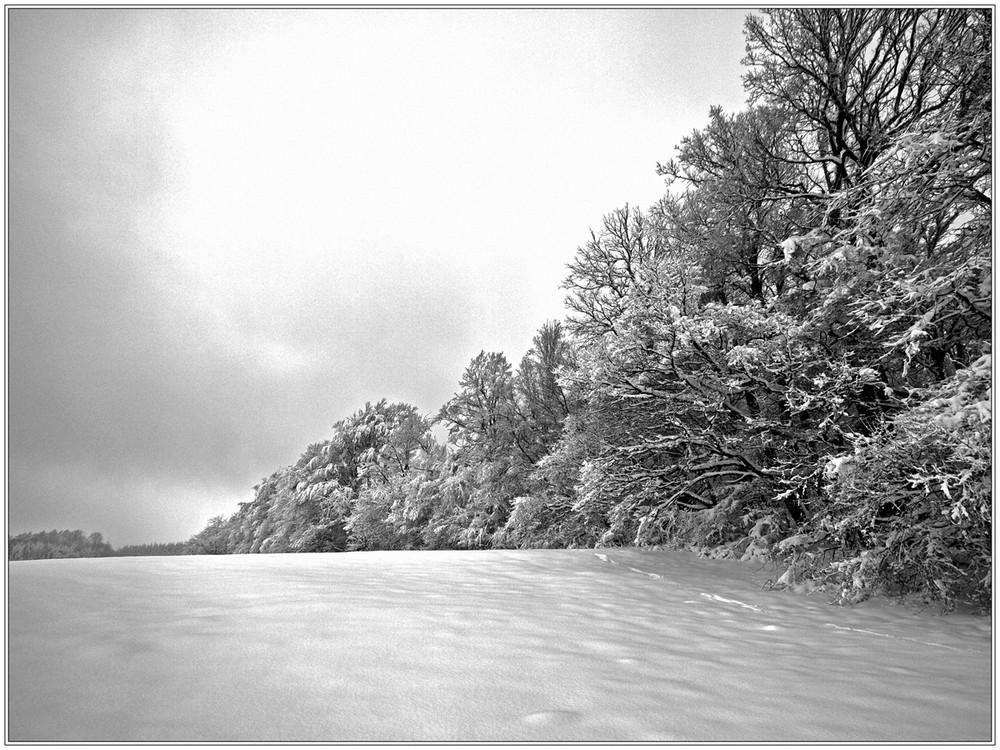 ...winterwald...
