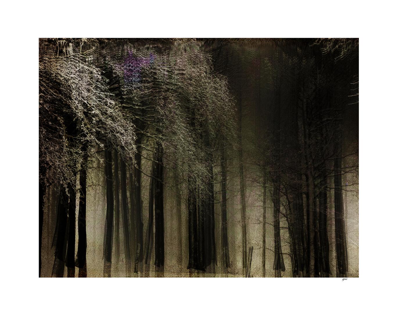 - winterwald -