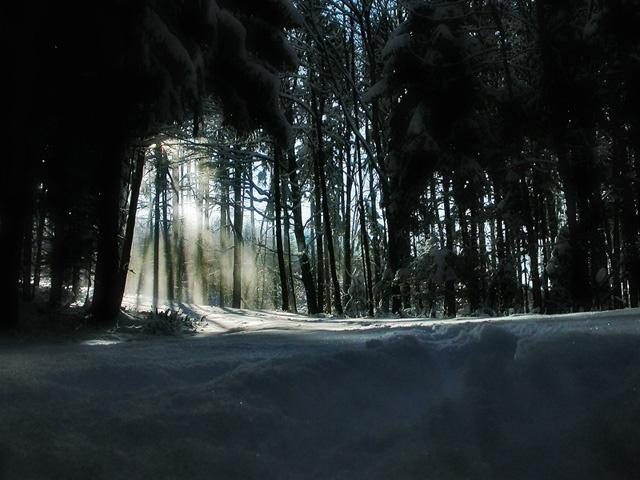 Winterwald von Martin Hirtl