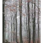 Winterwald bei Von der Heydt/Saar