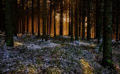 Winterwald...