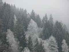 Winterwald Gerlitzen