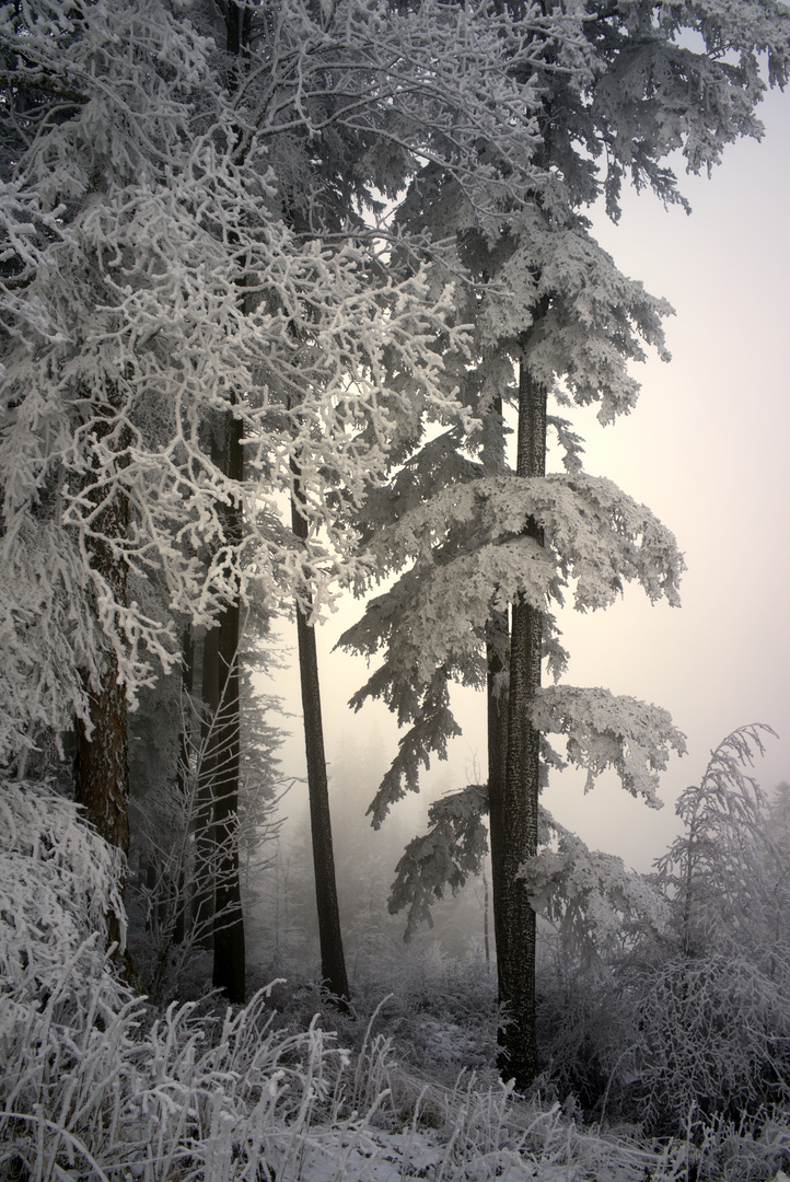Winterwald - Impression