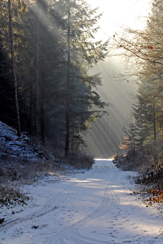 Winterwald in Farbe