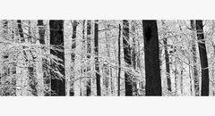 Winterwald ohne Farbe