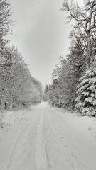 Winterwald - Perlacher Forst am 9.1.19