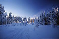 Winterwald - reload