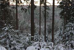 Winterwald soweit man schaut
